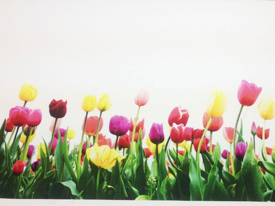Тюльпаны (кулирка)